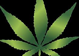 common sense cannabis